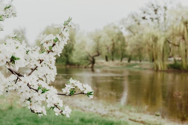 Takken van bloeiende boom. rivier achtergrond