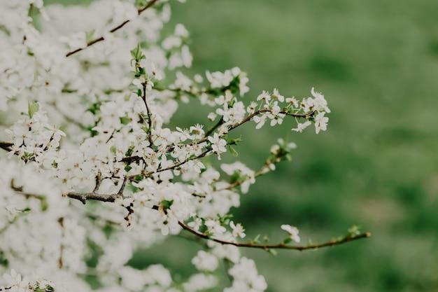 Takken van bloeiende boom