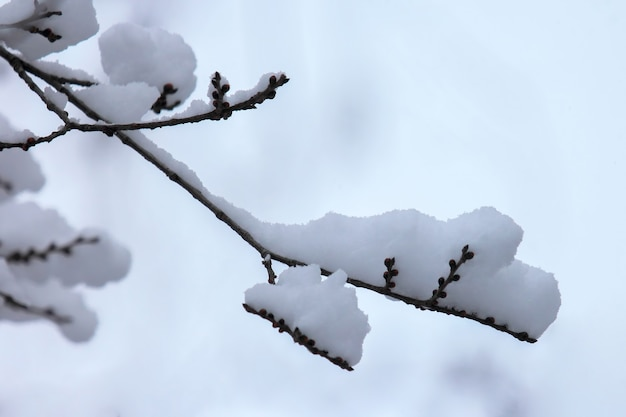 Takken van bomen bedekt met sneeuw in de winter
