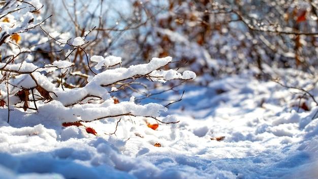 Takken van bomen en struiken bedekt met een grote muts sneeuw bij zonnig weer