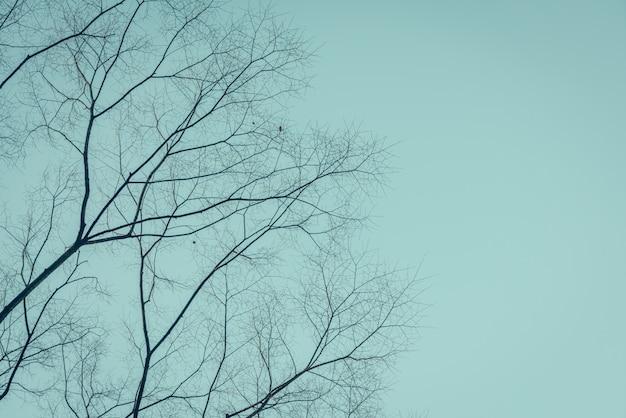 Takken van bomen (gefilterde afbeelding verwerkt vintage effect.)