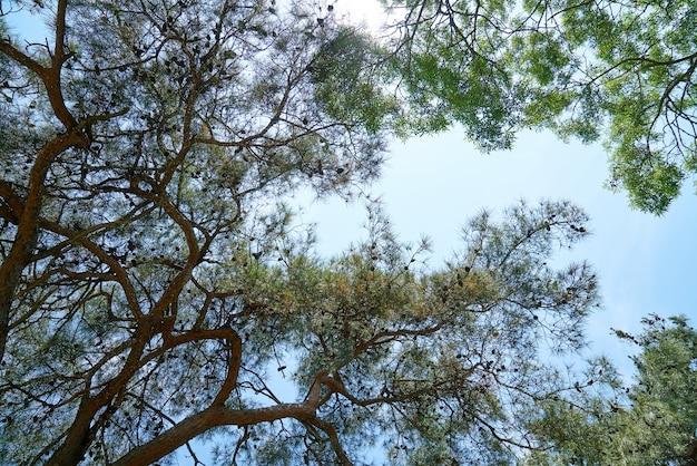 Takken van bomen met hemelachtergrond