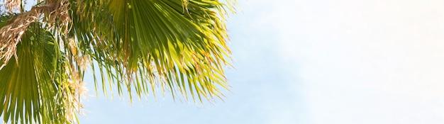Takken van dadelpalmen onder de blauwe hemel in de zomer