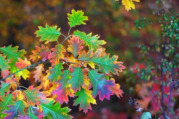 Takken van de herfstbomen op een vage bokeh achtergrond