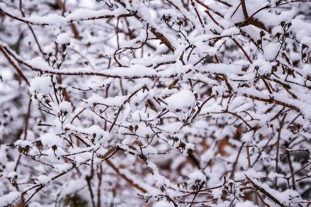 Takken van een boom zijn bedekt met rijm in de winter ijzige bomen in besneeuwd bos