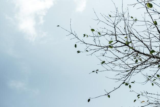 Takken van een boom zonder bladeren tegen het licht