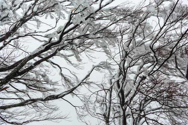 Takken van een met sneeuw bedekte, ijzige boom bij bewolkt weer.
