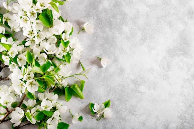 Takken van een wit bloeiende appelboom op een lichtgrijze bovenaanzicht als achtergrond