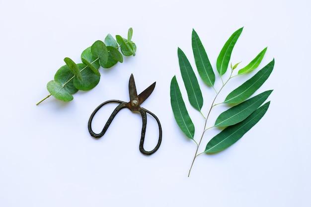 Takken van eucalyptus en vintage schaar