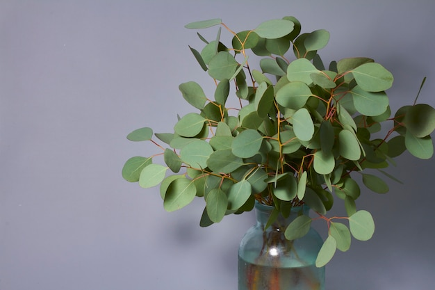 Takken van eucalyptus in vaas op tafel. huisdecoratie. blog, website of social media concept.