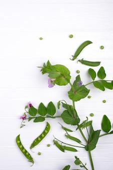 Takken van groene erwt met paarse bloem en peulen op witte achtergrond. kopieer ruimte