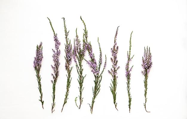 Takken van heide met violette bloemen op wit