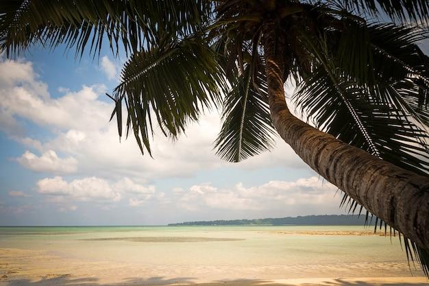 Takken van kokospalmen onder de blauwe hemel. uitzicht onder de palmbomen op zee. prachtig tropisch landschap. andamanen en nicobaren