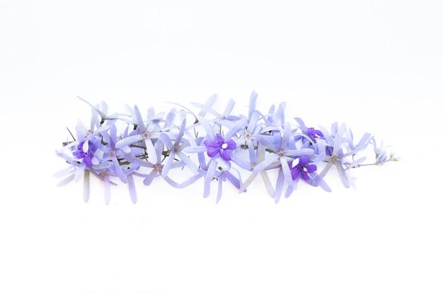 Takken van purpere bloemen op wit