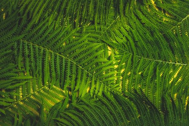 Takken van varens of palmbomen op een gele achtergrond. concept van de tropen. patroon. plat lag, bovenaanzicht
