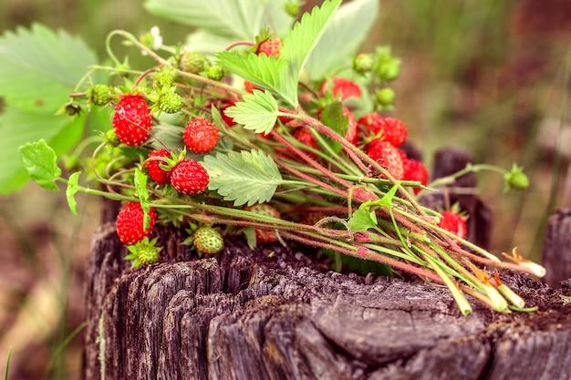 Takken van verse wilde aardbeien