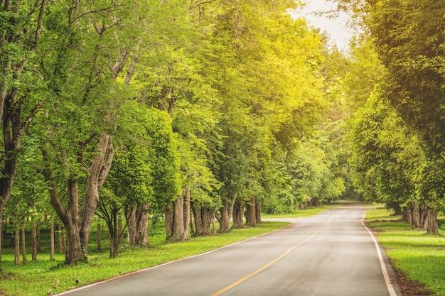 Tamarindeboom met twee kanten van de weg