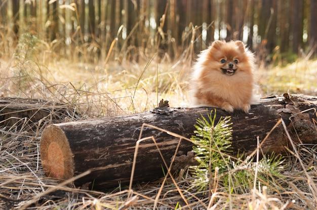 Tamme hond in het bos zittend op een logboek
