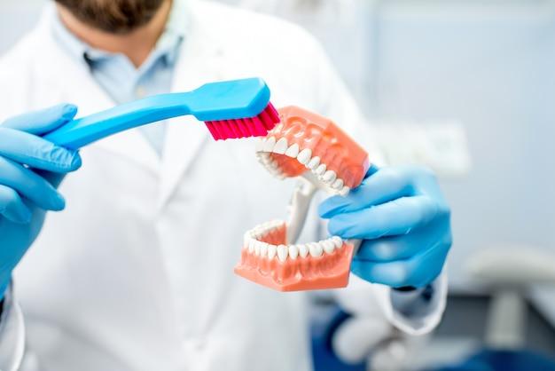 Tandarts die laat zien hoe je tanden poetst op kunstmatige kaak bij de tandartspraktijk. close-up van de kaak