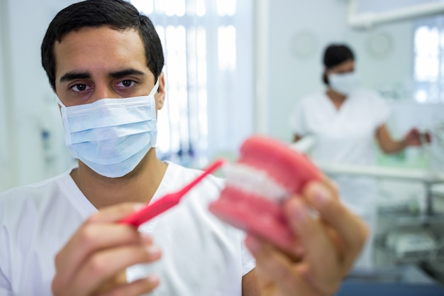 Tandarts die tandkaakmodel schoonmaken met een tandenborstel