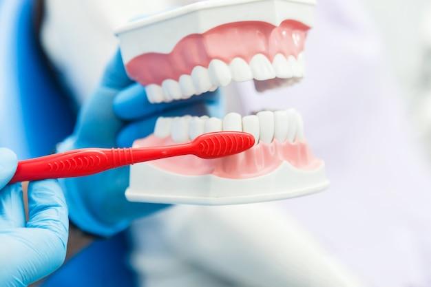 Tandarts die toont hoe tanden te reinigen