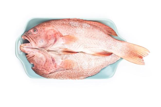Tandbaars om te worden gestoomd<grouper vis geïsoleerd op een witte achtergrond
