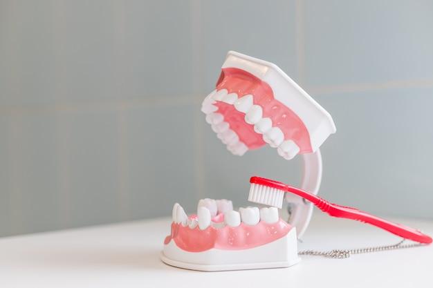 Tanden borstel en kaak geïsoleerd op tafel.