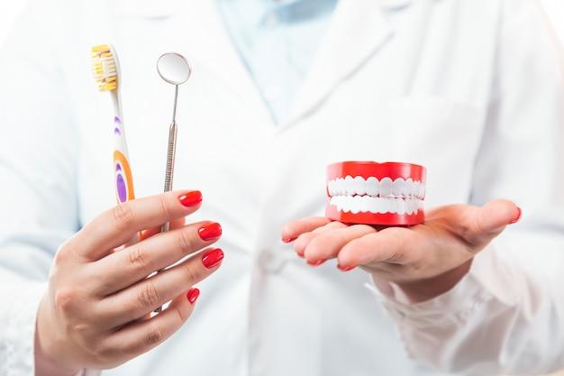 Tandenborstel en tandartsspiegelinstrument met menselijk kaakmodel in vrouwelijke tandarts artsenhanden.