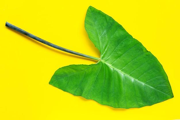 Taroblad op geel oppervlak.