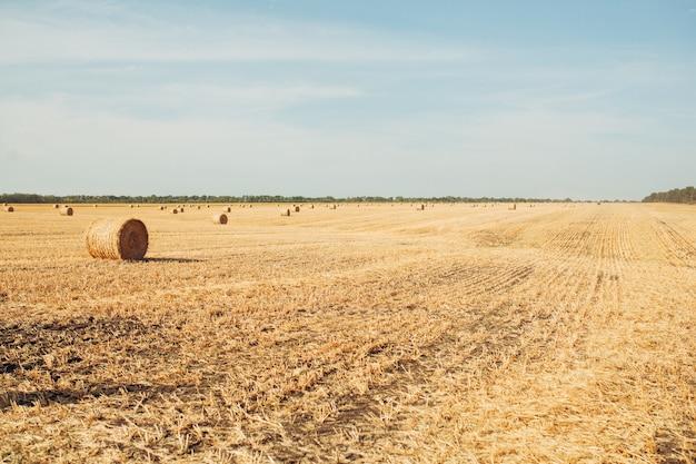 Tarwe oogsten in zonnige, landelijke veld herfst seizoen oogst