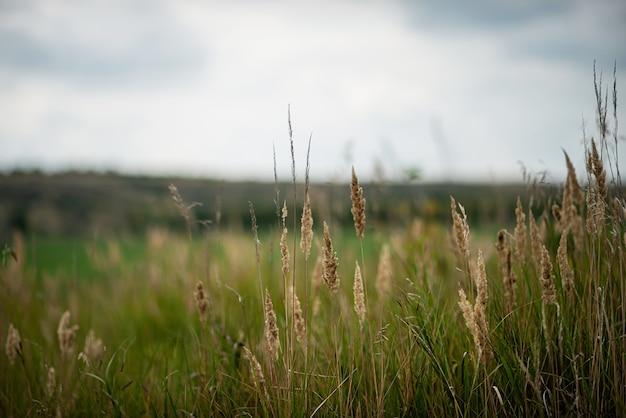 Tarwe op de achtergrond van een mooi landelijk landschap