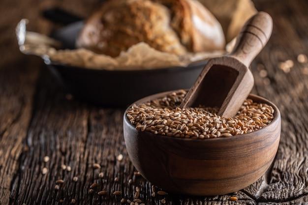 Tarwekorrels - het hoofdingrediënt van het brood gevuld in een houten kom en een houten rustieke schep diep in gestikt. bakend knapperig brood op de achtergrond.