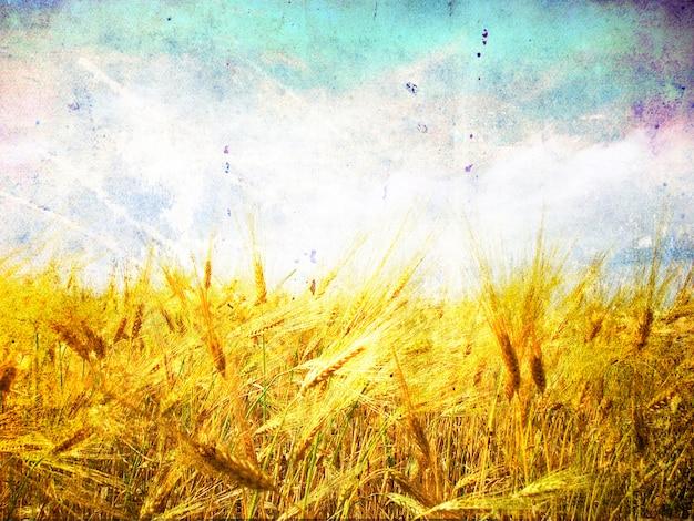Tarweoren tegen de blauwe lucht