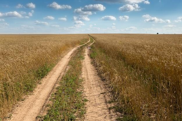 Tarweveld met een weg