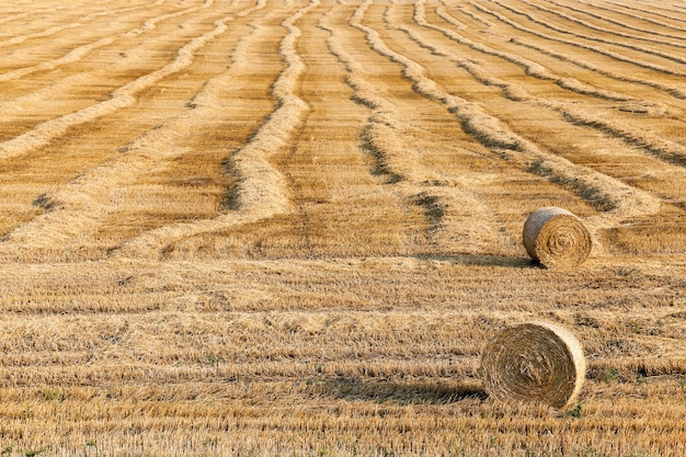 Tarweveld na oogst landbouwveld waar op aarde na de oogst op het tarwestro bleef staan