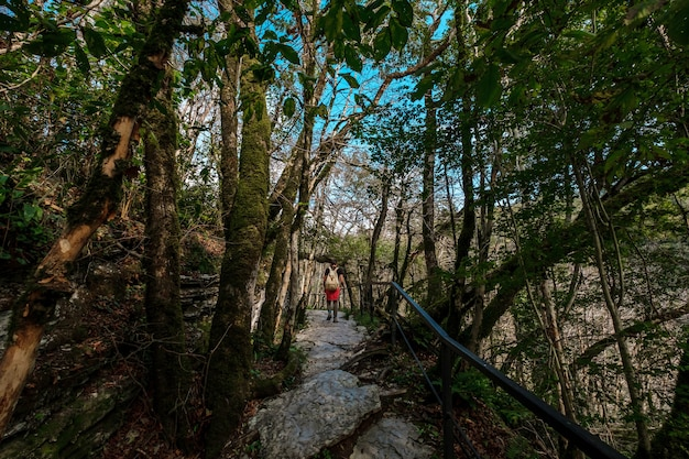 Taxus-bukshoutbosje in sochi, khosta, rusland. taxusboom en buxusboom grove met bospad tussen rotsen en mos in de zomer.