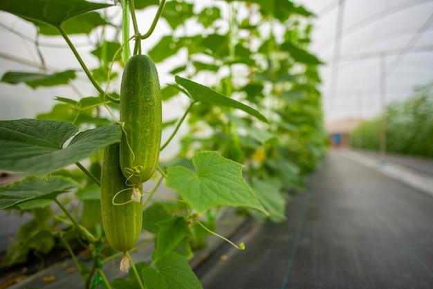 Technologie voor het telen van groenten in kassen