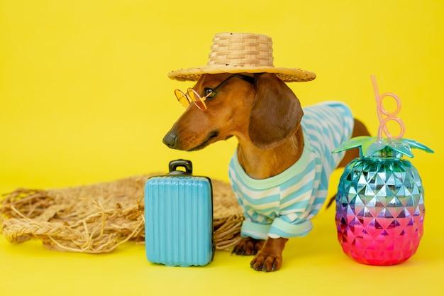 Teckel hond in een strooien hoed, zonnebril, een vest en een blauwe koffer op een gele achtergrond. zomerconcept, hotel voor honden