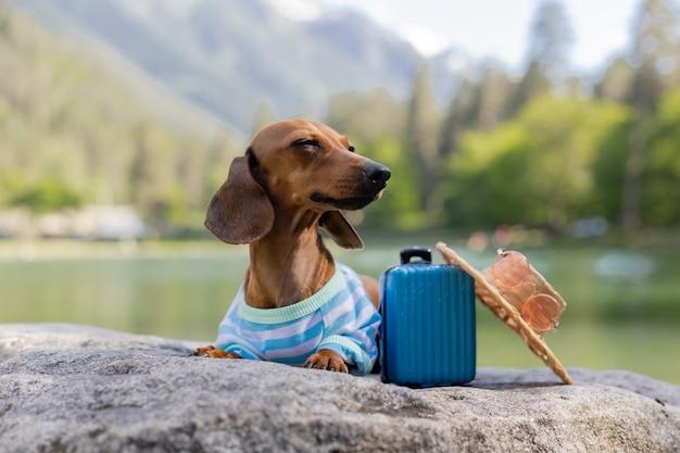 Teckel hond in zonnebril strohoed en zomerkleren zit in de buurt van water met koffer op zee