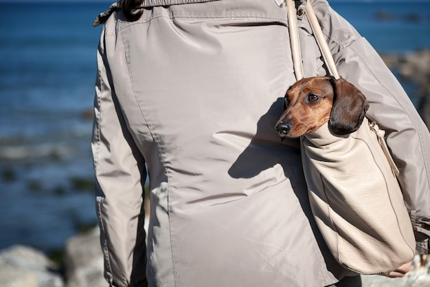 Teckel-hond vast in een tas