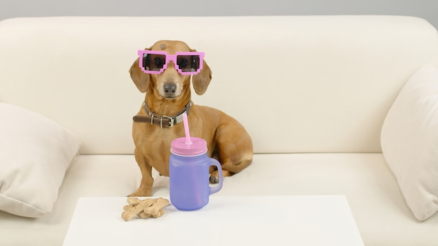 Teckelhond in roze zonnebril zit op de bank met een fles water huisdier op de bank thuis