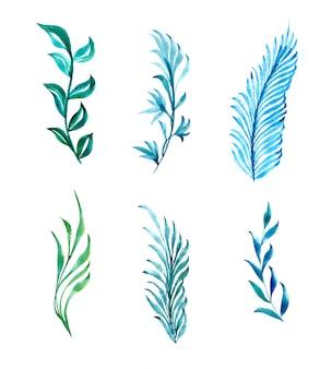 Tekening van de bladeren van een plant