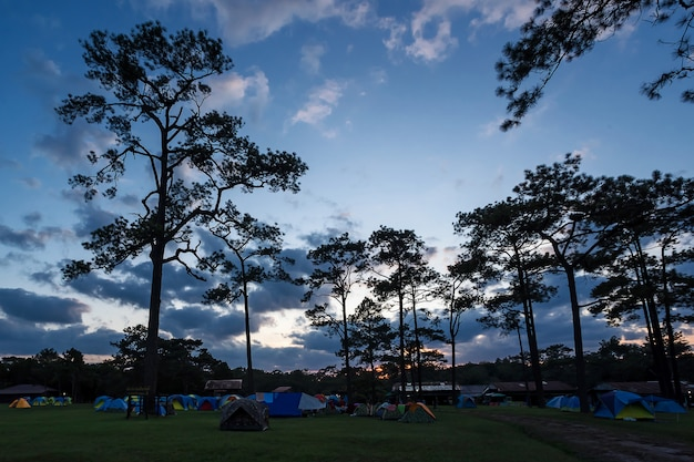 Tent in nationaal park.