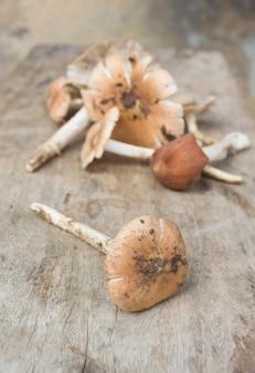 Termitomyces fuliginosus heim-paddenstoel op rustieke tafel