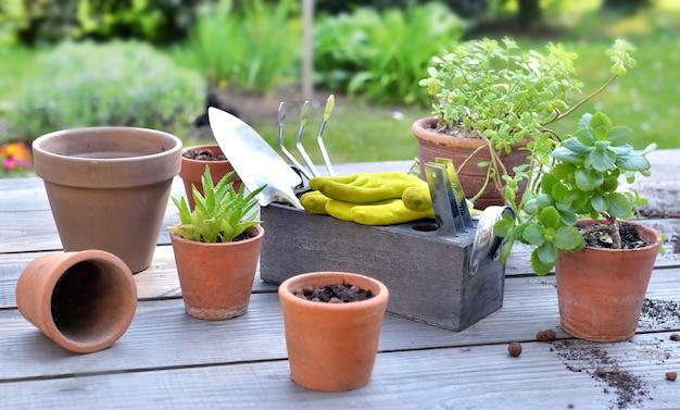Terracotta bloempotten en plant op een houten tafel met tuingereedschap in de tuin
