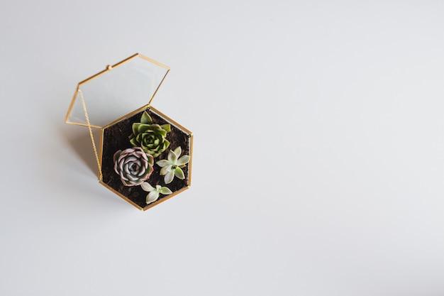 Terrarium met planten