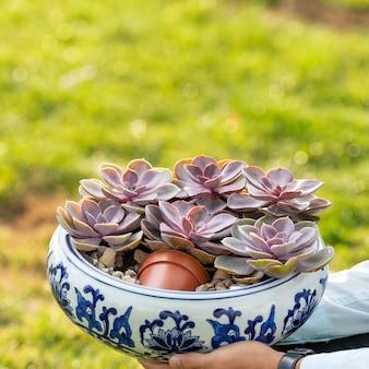 Terrarium plant sappige close-up