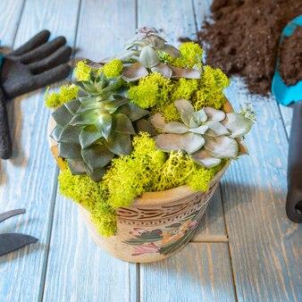 Terrarium, zand, rots, sappig, cactus, mos in de half gebroken keramische pot, handschoenen, schop