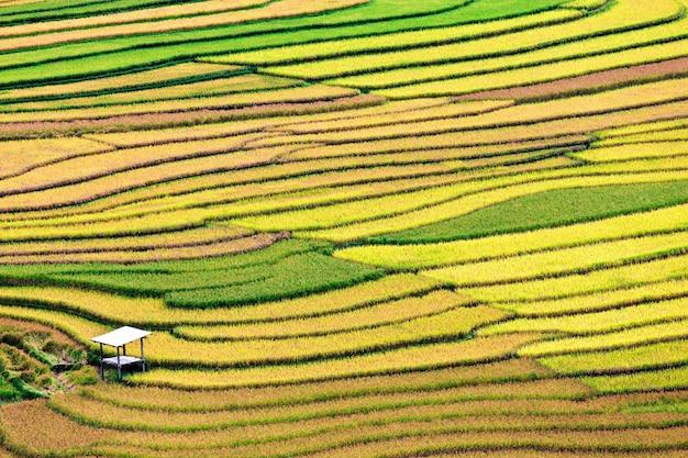 Terras rijstveld, vietnam