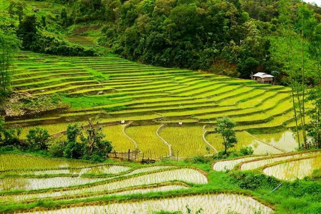 Terraspadieveld in noord-thailand. tambon mae ho mae sariang padieveld in mae hong son thailand.